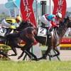 【有馬記念2015】ワンアンドオンリー鞍上はテン乗りの浜中